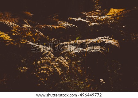 Close Up of Dry Yellow Autumn Fern Leaves on Foreground, Fall Colors and Autumn Forest Concept, Botanical Background, Natural Design Element For Halloween Poster And Season Art Countryside Background
