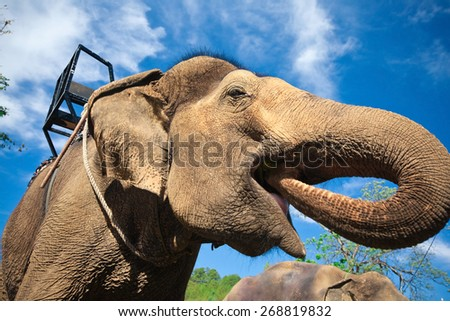 Close-up of eating elephant - stock photo