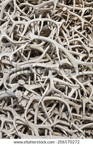 Close up of Elk Antler in Jackson Town Square, Wyoming - stock photo