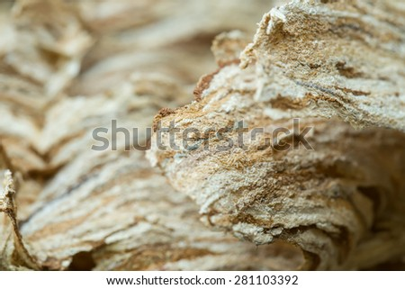 Close up of empty Wasp nest background or backdrop, Yellow Jacket Nest Paper - stock photo
