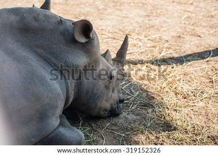 close-up of face and torso lying rhino side and slightly behind - stock photo
