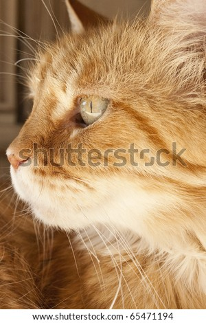 Close up of face of Cat - stock photo