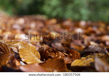 close-up of fallen autumn leaves on the ground - stock photo