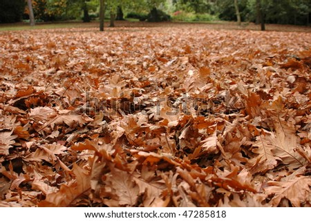 Close-up of fallen leaves in a park in the fall or autumn - stock photo