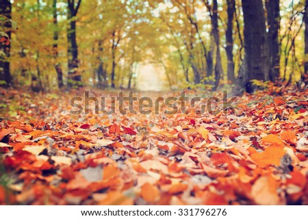 Close-up of fallen leaves on a road through forest - stock photo