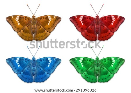 Close up of fancy color Mango Baron (Euthalia aconthea garuda) butterflies, isolated on white background with clipping path - stock photo
