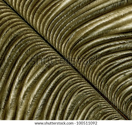 Close-up of feather on background. Macro - stock photo
