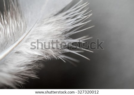 close up of feather ,soft focus - stock photo