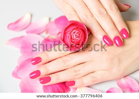 Close Up of Female Hands Wearing Bright Pink Polish on Nails and Holding Small Rose with Scattered Rose Petals on White Surface in Background - Spa Manicure Detail - stock photo