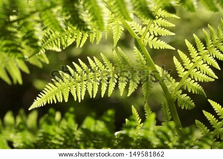 Close-up of Fern in the forest. - stock photo