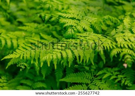 Close up of fern leaf - stock photo