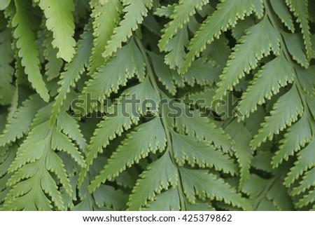 Close up of fern leaf. - stock photo