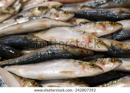 Close up of fish on display in a fish market  - stock photo