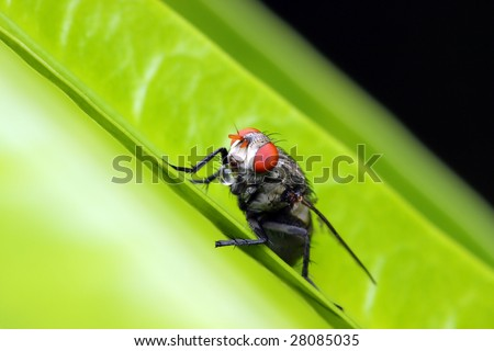 Close up of fly standing on green leaf.