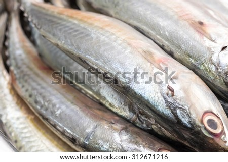 Close up of fresh and raw silver tuna or mackerel fishes for food preparing background - stock photo