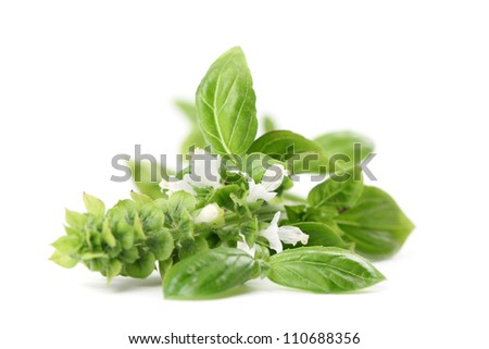 Close-up of fresh blooming basil isolated on white background