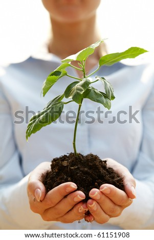 Close-up of fresh branch with leaves in soil held by human hands - stock photo