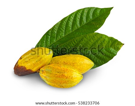 Close up of fresh cacao fruits with leaf isolated on white background, selective focus. Clipping path included.