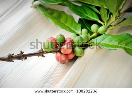 Close up of fresh coffee beans with leaf on texture background, selective focus. - stock photo