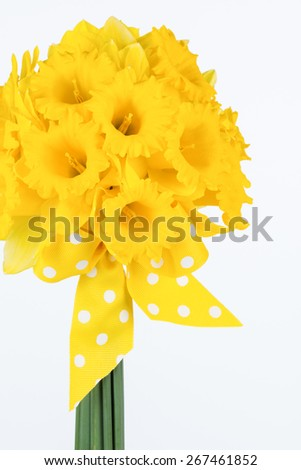 Close up of fresh cut vivid yellow trumpet daffodil hand tied bouquet with yellow and white polka dot bow. - stock photo