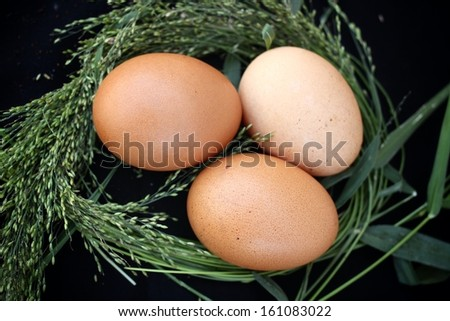 Close-up of fresh eggs.