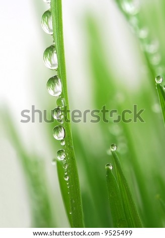 Close-up of fresh green straws with water drops against white background
