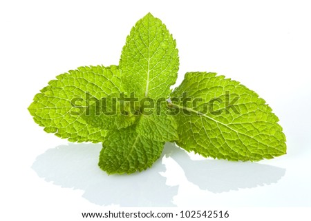 Close up of fresh mint leaves isolated over white background - stock photo