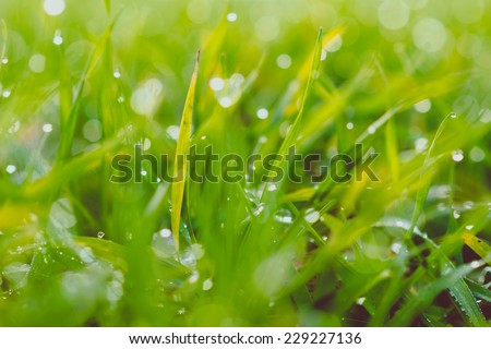 Close up of fresh morning dew on grass