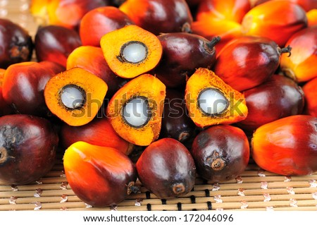 Close up of fresh oil palm fruits, selective focus. Palm oil, a well-balanced healthy edible oil is now an important energy source for mankind. It comes from the fruit itself (reddish orange). - stock photo