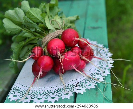 Close up of fresh radishes on white napkin, summer vintage still life - stock photo