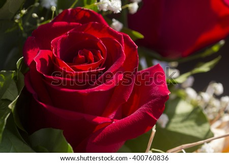 Close up of fresh red rose with space for copy or text -out of focus floral arrangement as a background - stock photo