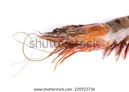 Close up of fresh shrimp. Isolated on a white background.