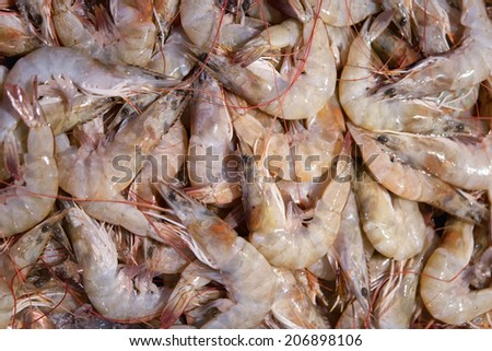 Close up of Fresh shrimps  - stock photo