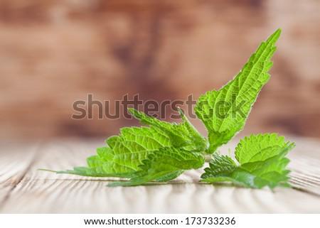 Close-up of fresh stinging nettle on wooden background. Shallow dof - stock photo