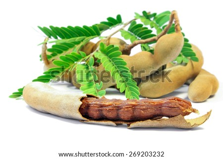 Close up of  fresh Tamarind, Fruit and Food ingredient. - stock photo