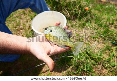 Close-up of freshly caught small fish in a fisherman hand outdoors on green grass background.