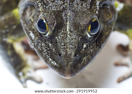 Close up of Frog - stock photo