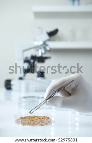 Close up of genetically modified seed in laboratory with microscope - stock photo