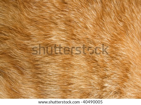 Close-up of ginger cat fur for texture or background - stock photo