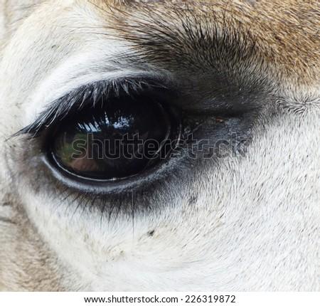 close up of giraffe eye - stock photo