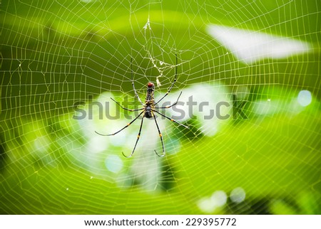 Close up of golden orb-weaver or giant wood spider or banana spider (Nephila pilipes) on its web - stock photo