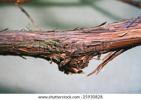 Close-up of grape vine - stock photo