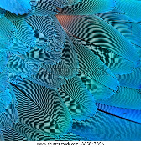 Close up of green and blue texture of Harliquin macaw bird's feathers, exotic blue background - stock photo