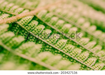 Close up of green fern spores - stock photo