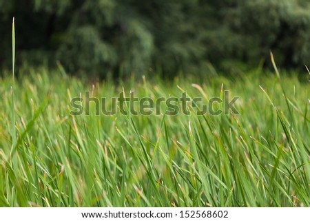 close up of green grass in a field or lawn - stock photo