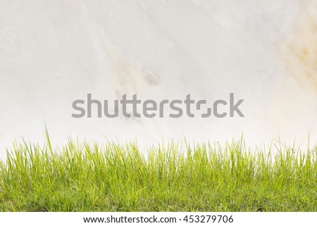 close up of green grass on a white marble wall. - stock photo