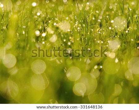 Close up of green grass with - stock photo