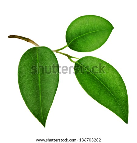 Close-up of green leaf - stock photo