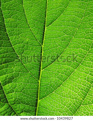 Close-up of green leaf with detailed structure - stock photo