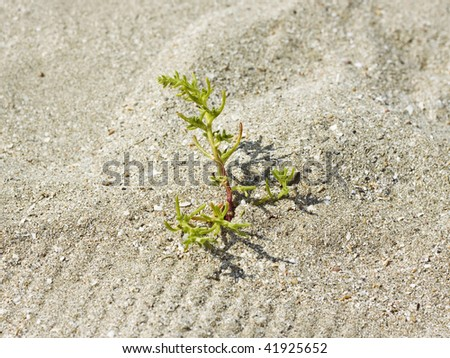 close-up of green plant in the sand - stock photo